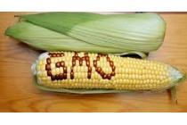 Điều kiện sản xuất, kinh doanh sinh vật biến đổi gen, sản phẩm của sinh vật biến đổi gen sử dụng làm thực phẩm