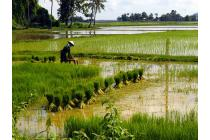 Xử phạt hành chính khi sử dụng sai mục đích đất nông nghiệp