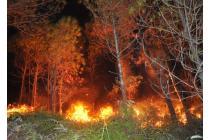 Quyền và trách nhiệm của chủ rừng trong phòng cháy chữa cháy rừng